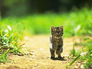 家猫.jpg