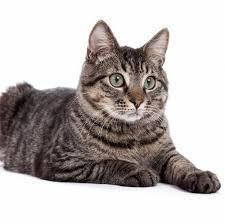 家猫1.jpg